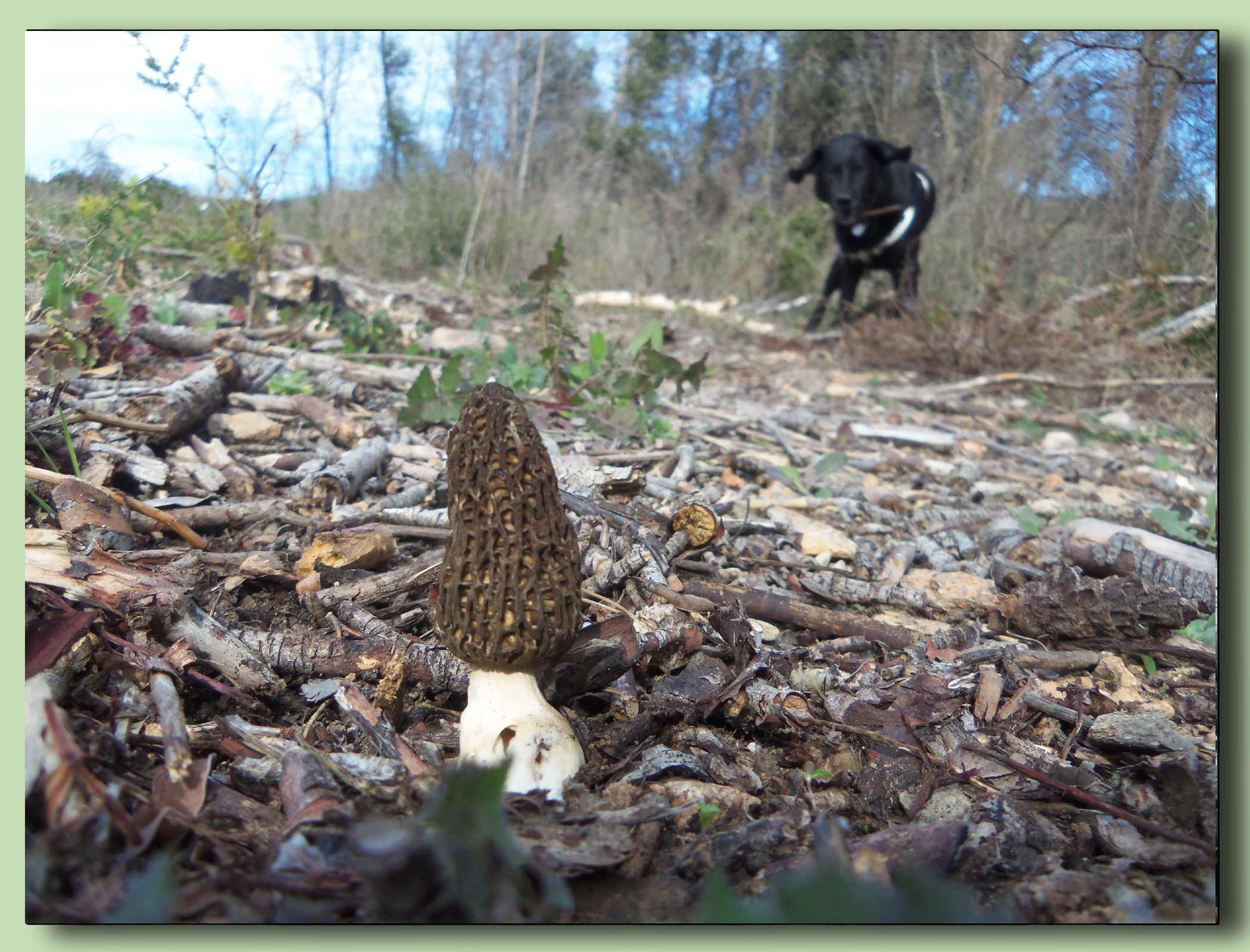 morels photo selection